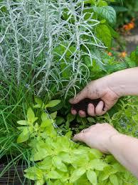 garden design garden design with herb planting chart home grown