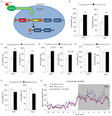 postnatal loss of hap1 reduces hippocampal neurogenesis and causes