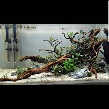 aquascaping layouts with stone and driftwood 960 best aquascapes images on pinterest aquarium ideas fish tanks