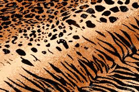 tiger cheetah print rug background stock photo picture and