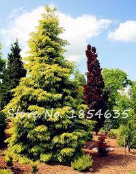 online get cheap bonsai flower tree aliexpress com alibaba group