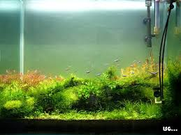 Diy Aquascape Diy Co2 Tank With A Bang Aquascaping Aquatic Plant Central
