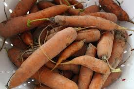 Freezing Root Vegetables - freezing carrots and parsnips u2013 the adventures of nutrigirl
