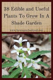 edible photo 38 edible and useful plants to grow in a shade garden farming my