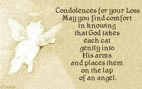 pet condolences 50 sympathy message pictures and photos