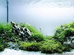 amano aquascape qui est takashi amano