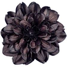 black flower flower clip black dahlia x large 6 inch large alligator hair