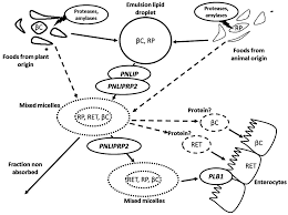 nutrients free full text genetic variations associated with