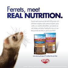 πάνω από 25 κορυφαίες ιδέες για ferret diet στο pinterest