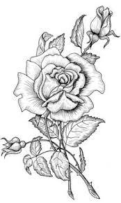 coloriage une rose et des boutons de rose dory coloriages