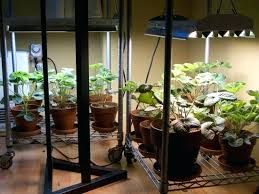 plants that don t need sunlight to grow plants that grow without sunlight how do some plants grow without