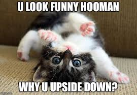 Funny Kitten Memes - hmmm kitten imgflip
