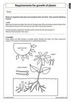 requirements for growth of plants natural science worksheet