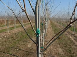 fiberglass tree stakes by ultrastake pictures ultrastake