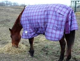 blankets tack room wardrobes for horses