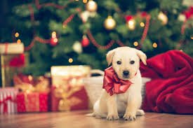 puppy gifts for rainforest islands ferry