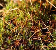 small plant supports carpets of moss similar to miniature forests u2013 naturally north idaho