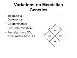 genetics travis mackoy gregor mendel 1860s developed basic