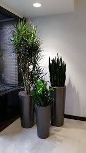 Interior Credit Union Credit Union Plantopia Interior Plant Service Indoor Plant