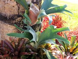january winter gardens in florida anotherdayinparadise