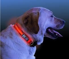 collar light for small dogs nite ize light up led dog collar sport safety vest with led lights