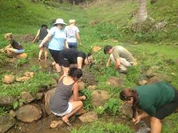 native plants in hawaii service stewardship sustainability kualoa ranch