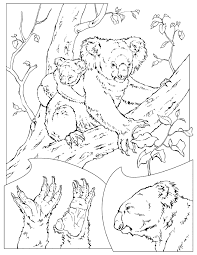 koala bear coloring page coloring book animals a to i coloring books