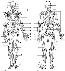 Anatomy And Physiology Coloring Workbook Chapter 6 Anatomy And Physiology Coloring Pages Free Coloring Home
