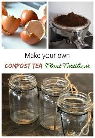 ground egg shells home made miracle grow make your own plant food