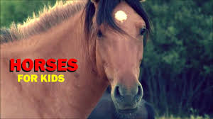 pics photos kids horses