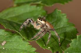 spidering on gibraltar island spidersrule