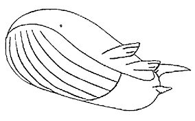 pokemon coloring pages wailord coloring pages pokemon wailord drawings pokemon