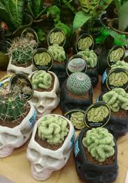 Unique Plant Pots Cactus Planted In Unique Pots Photo Audrey Kitching U0027s Photos