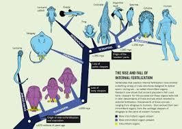 november birth animal anatomy of animals