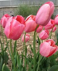 Botanical Gardens Grand Junction 48 Best Springtime In The Grand Valley Images On Pinterest Fruit