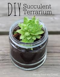 diy succulent terrarium family food and travel