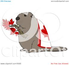 canadian beaver holding maple tree branch and wearing canada flag