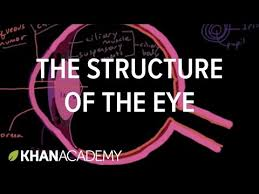 The Blind Spot In The Eye Is Due To The Structure Of The Eye Video Khan Academy