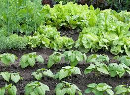 the well fed garden feeding vegetables