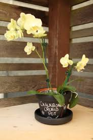 wild orchid home decor 43 best orchid decor images on pinterest white orchids floral