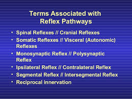 Visceral Somatic Reflex Spinal Tracts And Reflexes