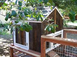 Backyard Quail Pens And Quail Housing by 23 Best Quail Images On Pinterest Raising Quail Chicken Coops