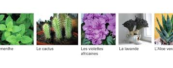 plantes d駱olluantes chambre plante pour chambre 5 plantes pour purifier votre chambre plante