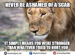 lion quotes memes different types of funny animal memes