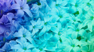 turquoise flowers blue turquoise flowers lilac floral background floral wallpaper