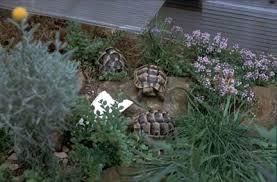Tortoise Bedding Tortoise Trust Web Basic Housing For Hatchlings