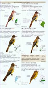 field guide to the birds of colombia miles mcmullan thomas m