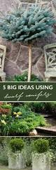 42 best small trees for small spaces images on pinterest small