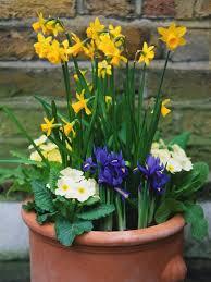 how to plant a spring container garden hgtv