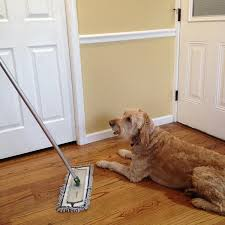 Best Laminate Flooring For Dogs Amazon Com 20